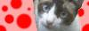 猫と犬を守る会バナー